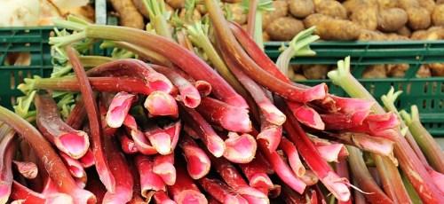 Rhabarber - das Low Carb Obst zum Abnehmen