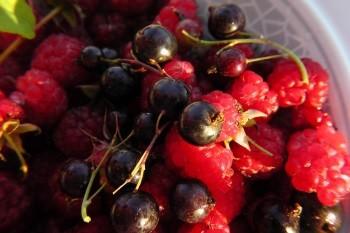 Frische Low Carb Obst zum Abnehmen Beeren