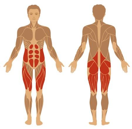 Kniebeugen Muskeln schematisch