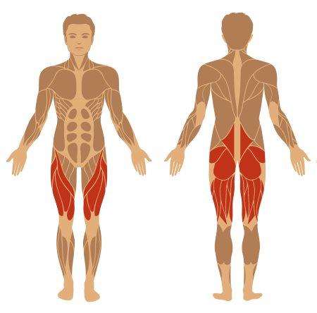 Kreuzheben Muskeln - Im Wesentlichen involvierte Muskeln beim Kreuzheben